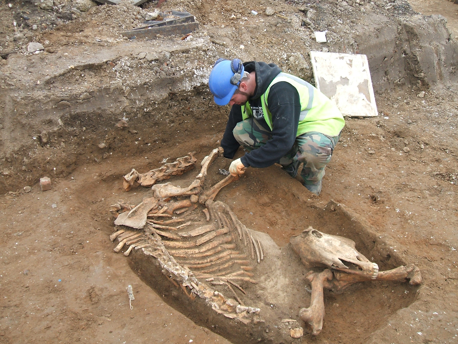 Excavating a horse burial, Bury St Edmunds, Suffolk
