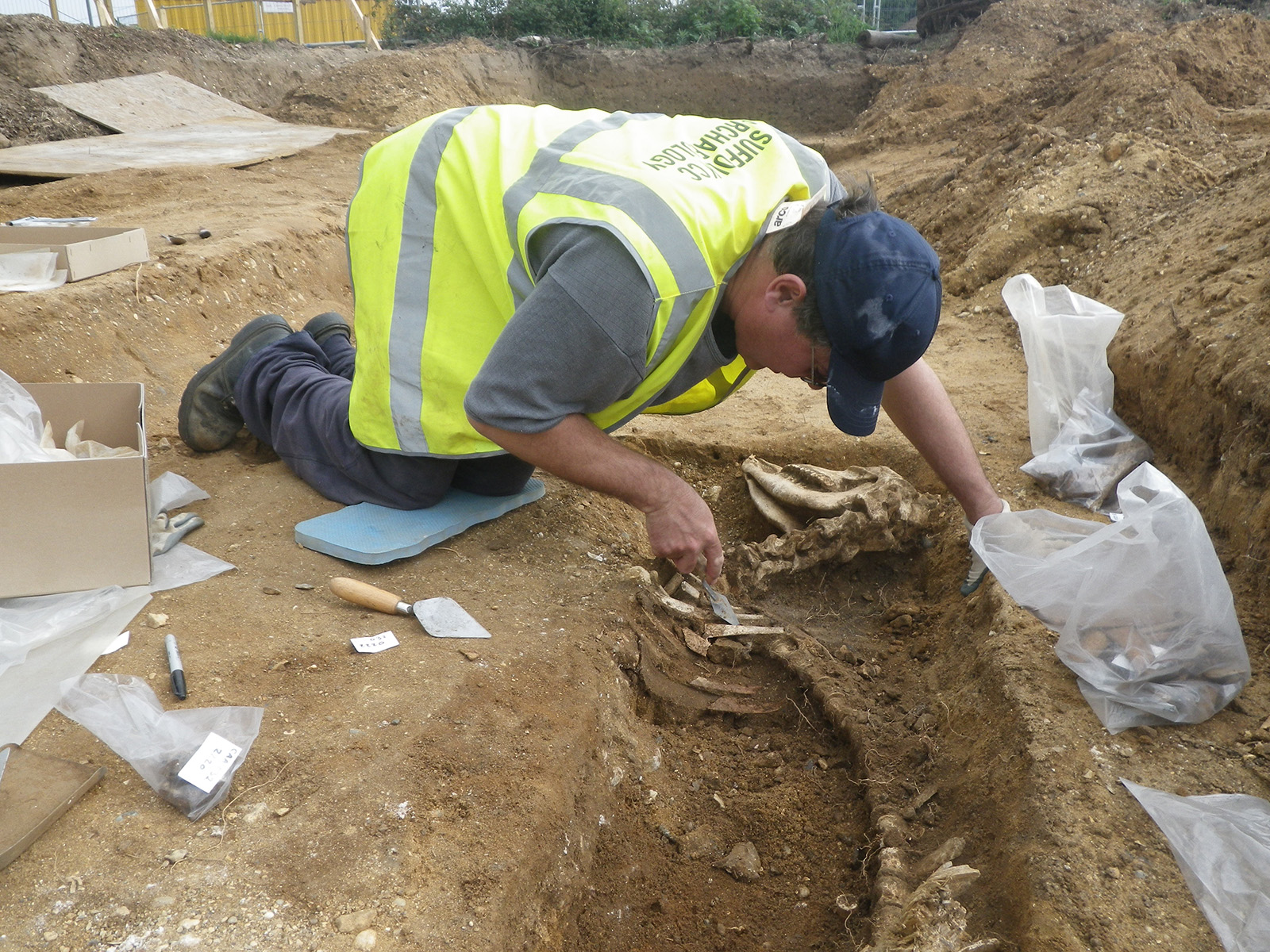 Excavating an animal burial at Campsea Ashe, Suffolk