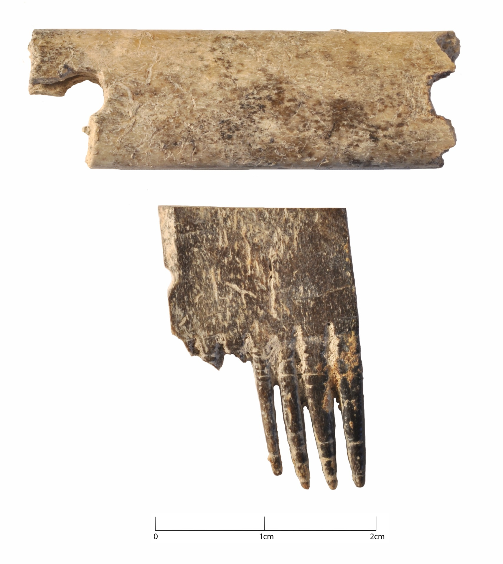Anglo-Saxon bone comb from Isleham, Cambridgeshire